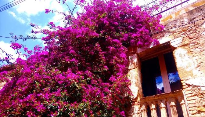 Flors vila